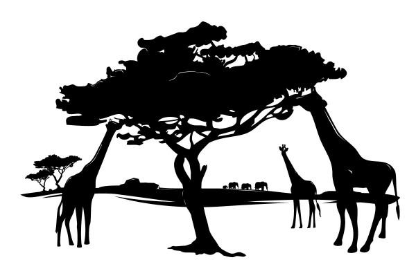 Wandtattoo Afrika Wüste Giraffen Motiv #85