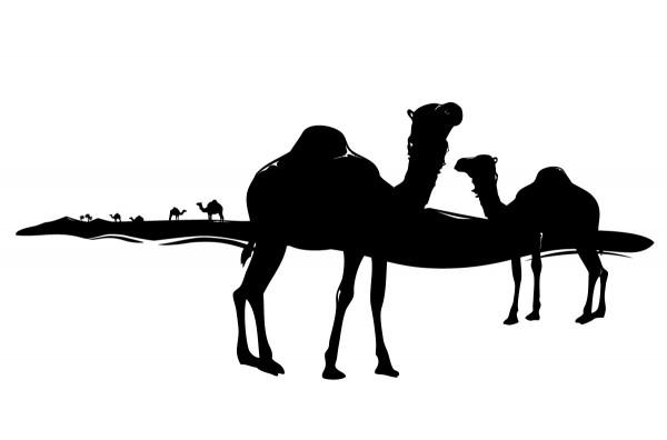 Wandtattoo Afrika Wüste Kamele Motiv #84